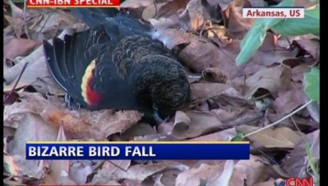 Anomalies Like Dead Birds Drive Conspiracy Theorists Batty