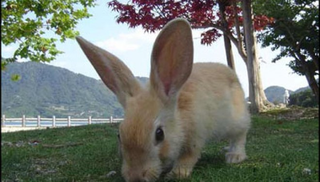 Abandoned Japanese Chemical Weapons Facility Overrun By Bunnies
