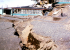 Alaska Earthquakes More Frequent Than All Of US Combined