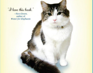Oscar the Cat Predicts Patients' Deaths