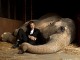 Video Shows Star of Water for Elephants Originally Trained with Electric Shock