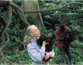 Despite Plenty of Bigfoot Sightings – There Is Still No Evidence