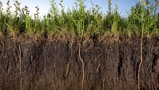 The Hidden Dangers of the Roundup Herbicide Weed Killer
