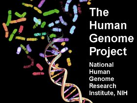 human geome project Human genome project: human genome project, an international collaboration that successfully determined, stored, and rendered publicly available the sequences of.
