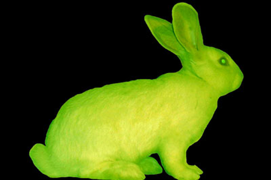 Will There Be Glow In The Dark Pets In The Future? | Top ...