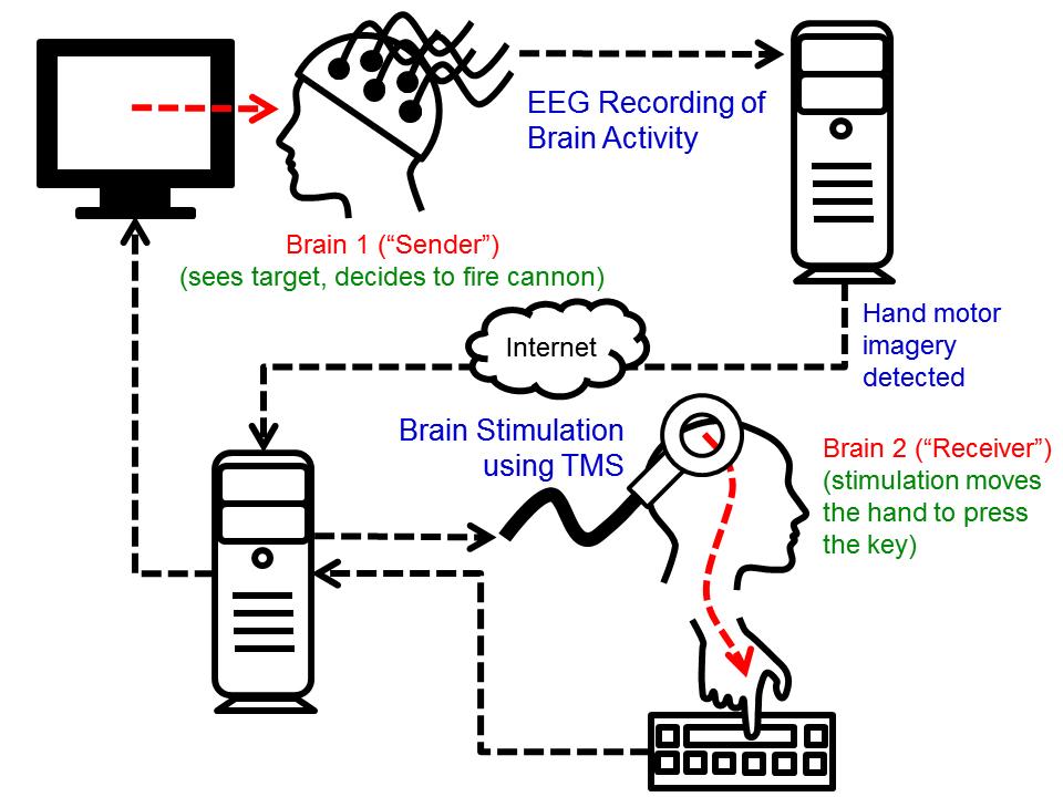 brain-to-brain diagram