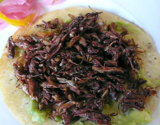 Bugs: A Cheap, Nutritious, Sustainable Way to Eat
