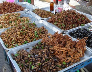 Dining Options for Insect Delicacies