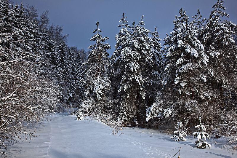 mountain winter trail