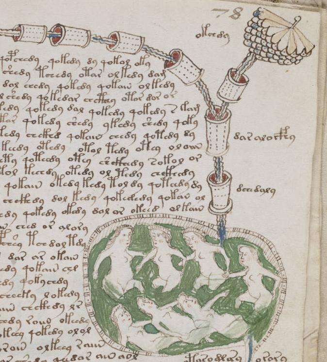 they voynich manuscript