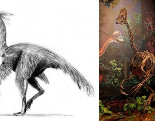 Scientists Discover New Chicken From Hell Dinosaur Species