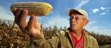 Are GMO Industry Lobbyists Pushing Genetically Modified Corn in Europe?