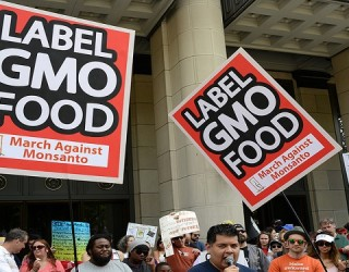 Why Genetically Modified Organisms (GMOs) Are Banned in Europe