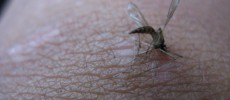 Climate Change is Bringing West Nile Virus to the West for Good