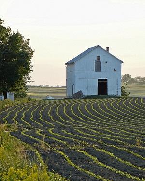 gmo farm