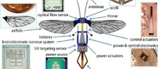 Using Robotic Bees to Pollinate: Is This the Future for Animals?