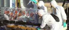 White House Correspondent: We're Screwed if Ebola Tests Come Back Positive