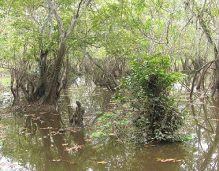 Where To Sleep for Survival in a Swamp Environment