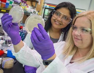 Researchers Bioengineering Bacteria to Produce Renewable Gasoline