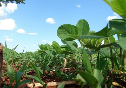 Study Shows Genetic Damage in Brazilian Soybean Farmers Due to Pesticide Exposure