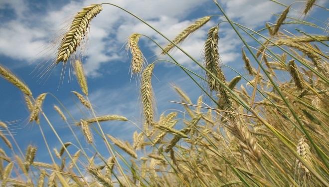 Is Monsanto's Legal Power Eroding Farming Freedom in America?