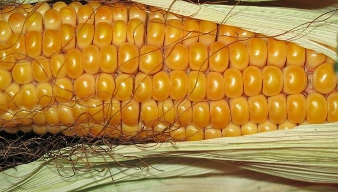 A Monsanto Food List to Avoid