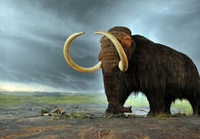 If They Can Clone a Mammoth, What's Next?