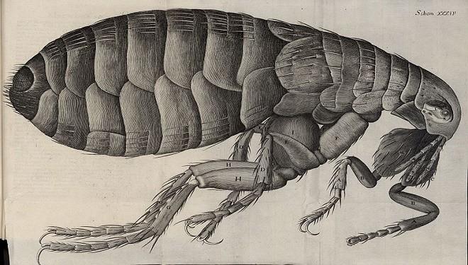Bubonic plague scammer