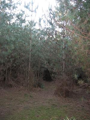 rendlesham forest ufo path