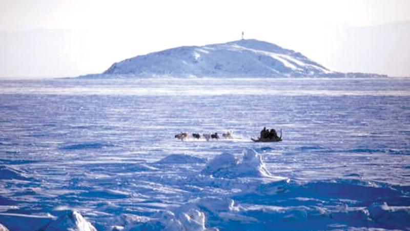 arctic pings