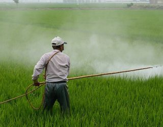 Monsanto Attacks International Cancer Agency for Warning Public