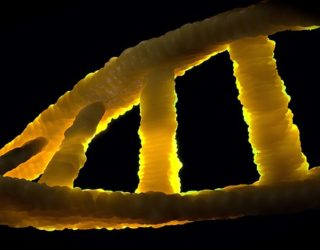 How Scientists Can Genetically Prevent Disease