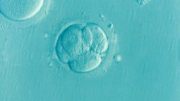 Is a new embryo-editing technique better than CRISPR?