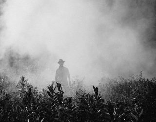 Monsanto's Weed Killer Roundup Found in Humans Up 500%