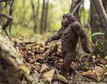 9 Best Sites to Find Bigfoot Pictures Online