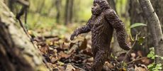 9 Best Sites to Find Bigfoot Pictures Online